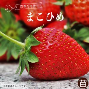 いちご 苗 まこひめ 3号ポット苗 イチゴ 苺 予約販売9月末頃入荷予定