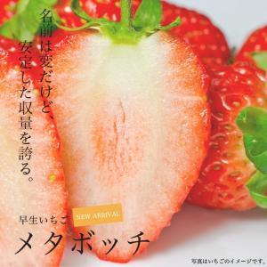 いちご 苗 メタボッチ 3号ポット苗 イチゴ 苺 予約販売9月末頃入荷予定