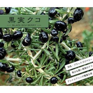 黒実クコ ( ブラックゴジベリー ) ポット苗 果樹苗 ゴジベリー 枸杞