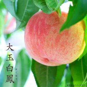 桃 苗木 大玉白鳳 ( おおだまはくほう ) 1年生 接ぎ木 苗 果樹 果樹...