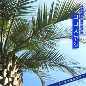ヤシの木 ココスヤシ ポット苗常緑樹 観葉植物 耐寒性