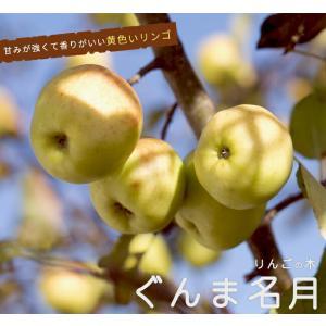 ●品種の特徴 「あかぎ」に「ふじ」を交配した、群馬県生まれの黄色いリンゴです。果皮の色が黄緑から黄色...