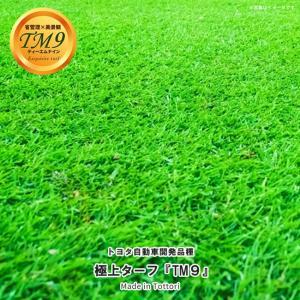 芝生 鳥取県産 高麗芝 TM9 (ティーエムナイン) 1束 日時指定不可