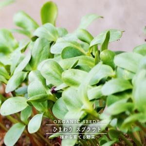 有機種子 ひまわり/スプラウト Mサイズ 100g 種蒔時期 周年