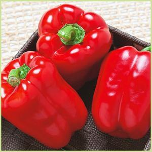 フルーピーレッドは、果重120g程の赤色パプリカです。生育旺盛で着果性にすぐれ栽培し易く、開花後60...