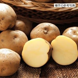 ジャガイモ・男爵薯(だんしゃくいも)の種芋(2kg)...