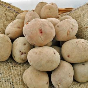 ジャガイモ・さやあかねの種芋(2kg)の商品画像