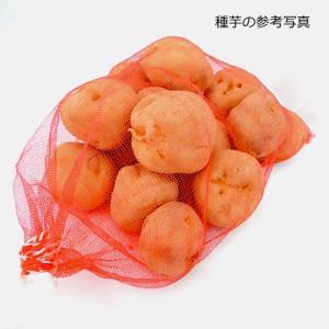 ジャガイモ・さやあかねの種芋(2kg)の詳細画像1