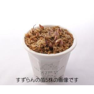 すずらん 苗 5株 北海道で栽培しているかわいいすずらんを咲かせましょう!