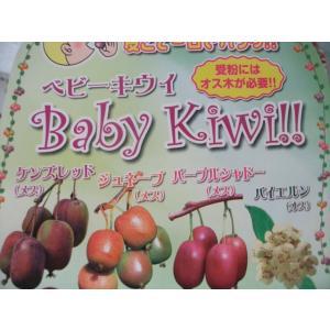 【新品種】【ベビーキウイ苗4種類5ポットセット】3号ポット・つる性落葉樹・果樹