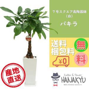 送料無料 7号 スクエア高陶器鉢 白 人気の観葉植物 おしゃれ パキラ 開店祝いなどのギフトにピッタリ 受け皿付き 大型 高さ約110cm|hanakyu
