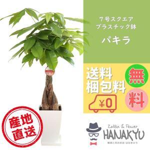 送料無料 7号 スクエアプラスチック鉢 人気の観葉植物 おしゃれ パキラ 開店祝いなどのギフトにピッタリ 受け皿付き 高さ約100cm|hanakyu