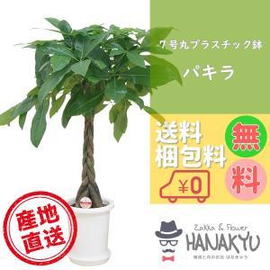送料無料 7号 丸プラスチック鉢 人気の観葉植物 おしゃれ パキラ 開店祝いなどのギフトにピッタリ 受け皿付き 高さ約100cm|hanakyu