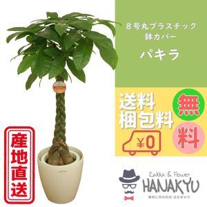 送料無料 8号 丸プラスチック鉢カバー 人気の観葉植物 おしゃれ パキラ 開店祝いなどのギフトにピッタリ 受け皿付き 大型 高さ約110cm|hanakyu