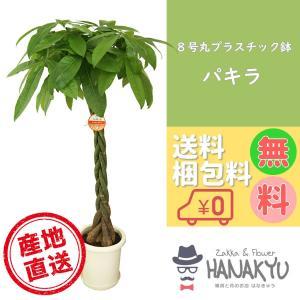 送料無料 8号 丸プラスチック鉢 人気の観葉植物 おしゃれ パキラ 開店祝いなどのギフトにピッタリ 受け皿付き 大型 高さ約110cm|hanakyu
