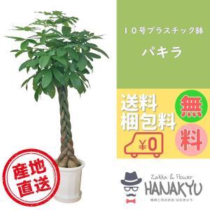 送料無料 10号 プラスチック鉢 人気の観葉植物 おしゃれ パキラ 開店祝いなどのギフトにピッタリ 受け皿付き 大型 高さ約170cm 尺鉢|hanakyu