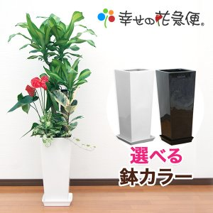 観葉植物 寄せ植え(ユッカ)8号高陶器-角鉢 高さ1.3m(...