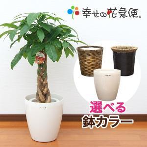 観葉植物 パキラ7号プラスチック鉢(鉢カバー付) 開店祝い 新築祝い