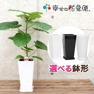 ◆商品詳細◆  【サイズ】 植物全体(鉢含む) 高さ約65〜75cm 鉢:直径(W) 高さ(H) 0...