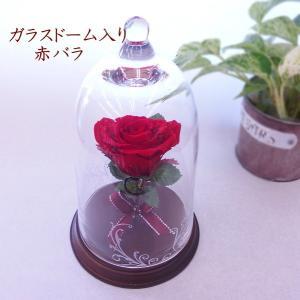 プリザーブドフラワー 赤バラ 1本バラ 美女と野獣 誕生日 結婚祝い 母の日 人気 ガラスドーム入り プロポーズ エスペランス|hanaland87