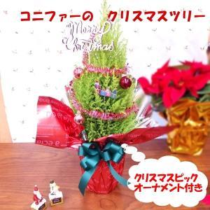 コニファーのクリスマスツリー クリスマスプレゼント クリスマス ギフト 観葉植物 ウィルマ ミニツリー オーナメント 飾り付き クリスマスツリ−|hanaland87