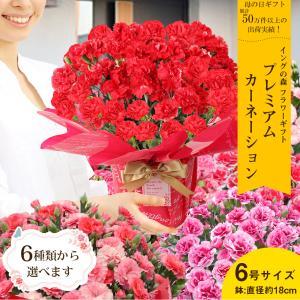 母の日カーネーション6号 鉢植え 花 2021 ギフト プレゼント 大きい おしゃれ プレミアム gift present 選べる7種類|hanamankai