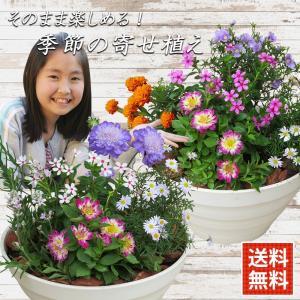 敬老の日 遅れてごめんね 花 ギフト プレゼント gift present花 季節に飾りたい寄せ植え 8号鉢 70代 80代 90代 全国送料無料|hanamankai