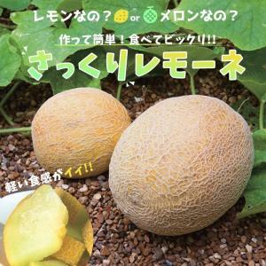 メロン 苗 野菜苗 レモン風味のメロン さっくりレモーネ 3号 (直径9cm) ポット苗 最新メロン 楽々簡単栽培|hanamankai