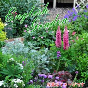 春待ち イングリッシュガーデン 花苗 セット 秘密のプレゼント付き 今から植えて春からの開花を楽しむセットです hanamankai
