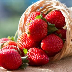 イチゴ 果実 苗 四季成り 苺 いちご トスカーナ ポット苗1個 家庭菜園 おすすめ|hanamankai