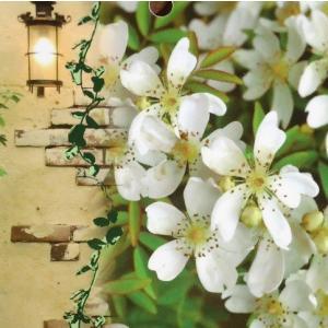 つるばら 花 苗木 春 モッコウバラ 木香薔薇 芳香高い一重咲き 鉢植え 白 12cmポット 全高約60cm hanamankai
