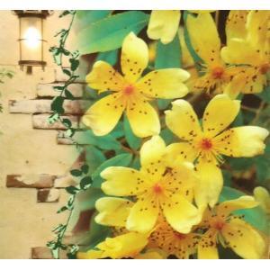 モッコウバラ 木香薔薇 ばら 花 苗 芳香高い一重咲き 黄色12cmポット長尺物 全高約60cm hanamankai