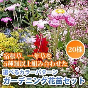初心者からベテランまで満足納得です! 5〜7種類のお花がセットされます。 (色違いも1種類に含まれま...