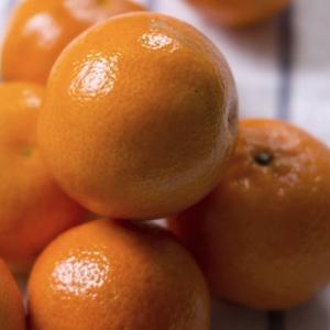 四季なり小ミカン 4.5号鉢 みかん 柑橘 家庭果樹 hanamankai