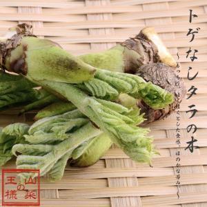 タラの木 トゲなし 苗木 挿し木 たらの芽 果樹 家庭樹 4.5号ポット 落葉樹 山菜|hanamankai