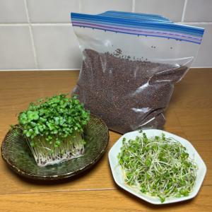 ブロッコリー(スプラウト)のタネ 業務用小分け 500ml 花粉症対策にも|hanamankai