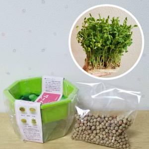 豆苗 栽培セット 種 野菜 容器とタネ約100ml 第4種郵便限定で全国送料無料! スターターキット|hanamankai