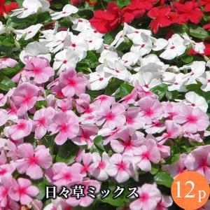 ◆内容 ニチニチソウ(ビンカ)花苗【MIX】12ポットセット(ラベル有り)(一年草)9cmサイズポッ...