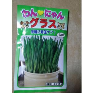 猫草 種 ペット用 エン麦 約35g 送料73円の画像