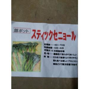 野菜苗 スティクセニョール ブロッコリー