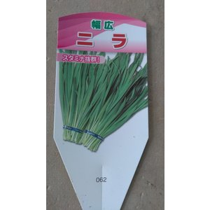 野菜苗 ニラ 中華料理
