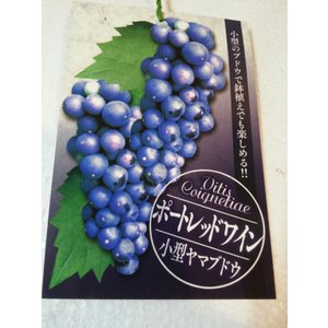山ぶどう ポートレッドワイン 鉢植 小型山葡萄...