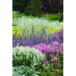 庭植えで毎年花が楽しめる宿根草のセットです。品種はおまかせですが通常購入より数量は多くてお買い得な商...