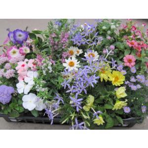 《10/28〜クーポン利用可能生活用品》  日光を浴びて咲いている花を見ていると元気な気持ちになりま...