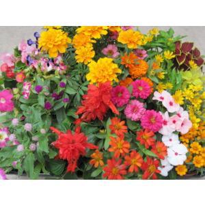 季節の花苗24個セット 【送料無料】|hananooukoku|02
