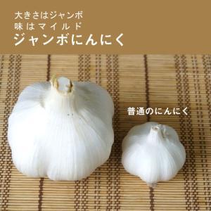種ニンニク 国産 ジャンボにんにく 8片|hananoyamato-online