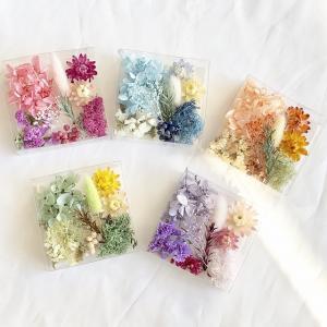 【ドライフラワー・プリザーブドフラワー】厳選花材パレット ヘリクリサム  キット ハーバリウム 材料 花材