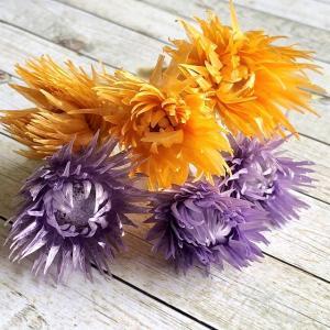 【プリザーブドフラワー】ミニシルバーデイジー パープル&オレンジ 2色6輪 大地農園 ハーバリウム レジン 髪飾り 花材 アレンジ キット