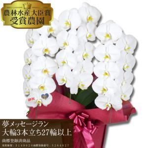 【夢メッセージラン】 〜花びらにメッセージ〜 胡蝶蘭 白大輪 3本立ち 27輪以上【営業日から3日後の配達】