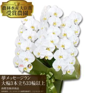 【夢メッセージラン】 〜花びらにメッセージ〜 胡蝶蘭 白大輪 3本立ち 33輪以上【営業日から3日後の配達】|hanayaka